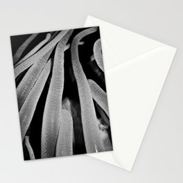 Worma Stationery Cards