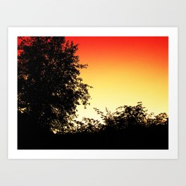 Sunset through the Trees Art Print