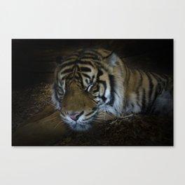 Sleeping tiger painterly Canvas Print
