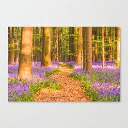 Bluebell Carpet at Hallerbos (Belgium) Canvas Print