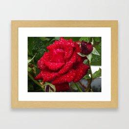 Rød rose Framed Art Print