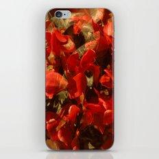 Alpenveilchenmix 1 iPhone & iPod Skin