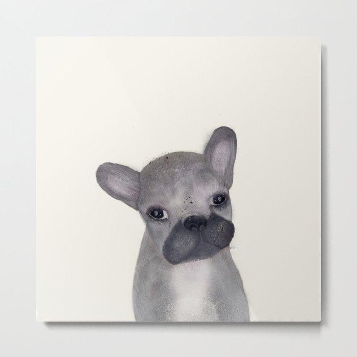 little french bulldog Metal Print