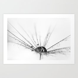 Abstract Beauty a wet Dandelion Seed Art Print