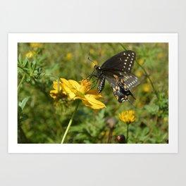 A Beautiful Pipevine Swallowtail Art Print