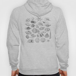 collection of sea shells, black contour on white background Hoody