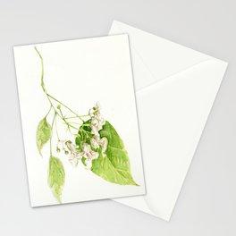 Catalpa Blossom 2017 Stationery Cards