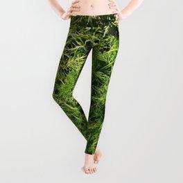 Green Vegetable Herbs Leggings