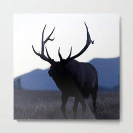 Watercolor Elk Bull 52, Estes Park, Colorado, Walk Slowly Backwards Metal Print