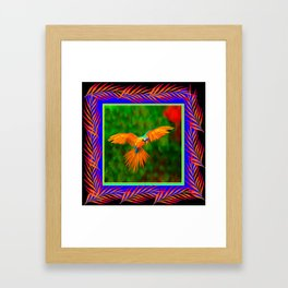 Decorative Flying Golden Blue Macaw Parrot  Black Green  Art Framed Art Print