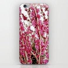 Placid iPhone & iPod Skin
