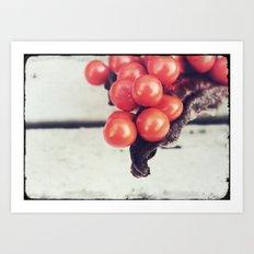 Seed Pods I Art Print