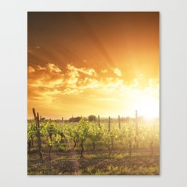 vineyard at sunset Canvas Print