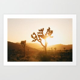 Joshua Tree II / California Desert Art Print