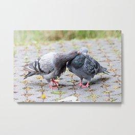Kissing pigeons (Columbidae), Lumphini Park, Bangkok, Thailand Metal Print