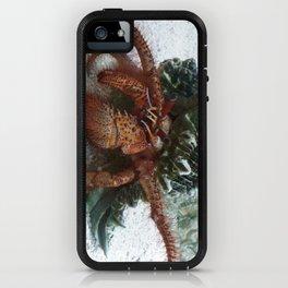 Pagurus Bernhardus 2 iPhone Case