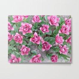 Pink velvet tulips Metal Print