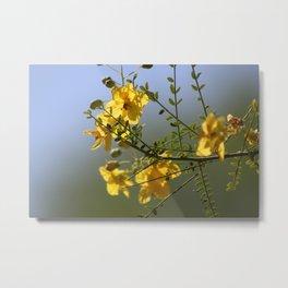 Closeup of Palo Brea Branch in Bloom Metal Print