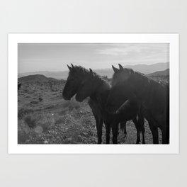Desert Horses Art Print