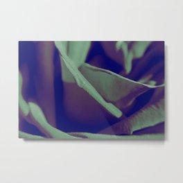 Cold Rose Metal Print