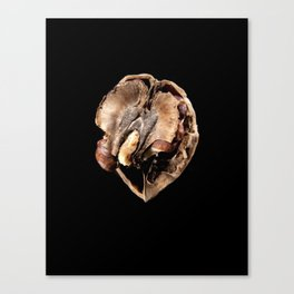 walnut Canvas Print