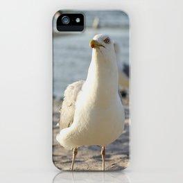 herring gull iPhone Case