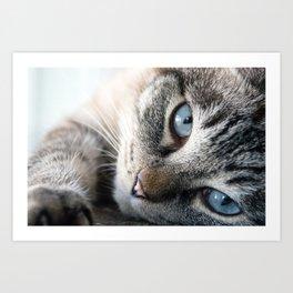 Blue Eyed Cat Close Up Art Print