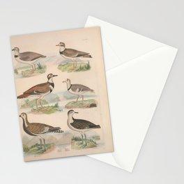 Wilsons Plover Ring Plover Killdeer Plover Musical Plover Virginian Plover10 Stationery Cards