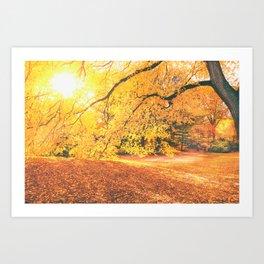 New York City Autumn Sun Art Print