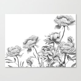 black and white peonies 2 Canvas Print