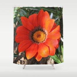 Close Up of a Beautiful Terracotta Gazania Flower Shower Curtain
