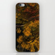 Autumn Leaves and Stream iPhone & iPod Skin