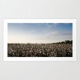 Cotton Field 2 Art Print