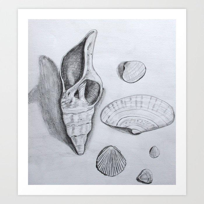 Sea Shells Pencil Drawing Art Print By Landandseaartstudio