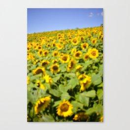 Summer Sunflower Love II Canvas Print