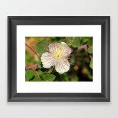 some flower Framed Art Print