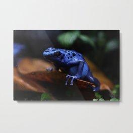 Blue Poison Dart Frog Azureus Metal Print