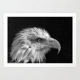 Majestic Bald Eagle Art Print