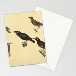 070 turdus palmarum turdus rusicollis Common Hill Myna Coleto gracula tristis10 Stationery Cards