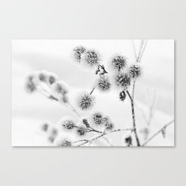 Iced thistles #2 Canvas Print