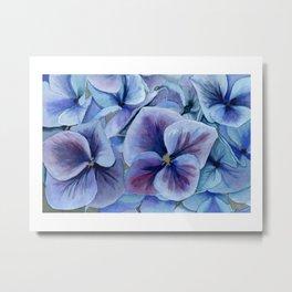 Blue and Purple Hydrangea Metal Print