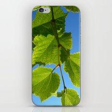 wine leafs iPhone & iPod Skin