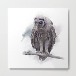 Young Barred Owl Perches on a Branch,Watercolor painting Metal Print