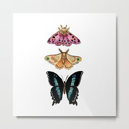 Magical Trio Butterfly and Moth_ Pink & Blue  Metal Print