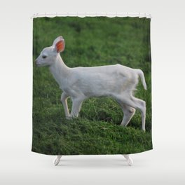 Baby Albino Deer Shower Curtain