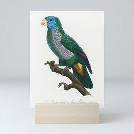 The Saint Lucia amazon Amazona versicolor from Natural History of Parrots (1801-1805) by Francois Le Mini Art Print