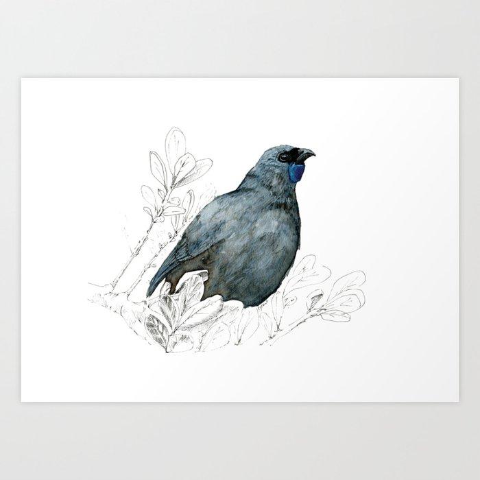 Kōkako, New Zealand native bird Art Print