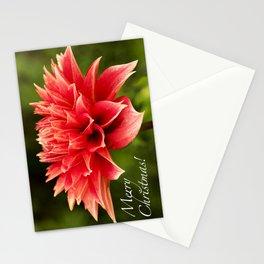 Merry Christmas | Parkland Glory Dahlia Stationery Cards