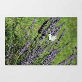 Lavender in Bloom Canvas Print