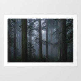 Cathedral Forest (Fine Art Landscape Photography) Art Print